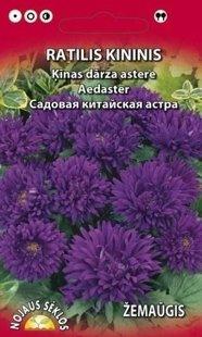 Asteres peonveidīgās violetas  ZEMĀS
