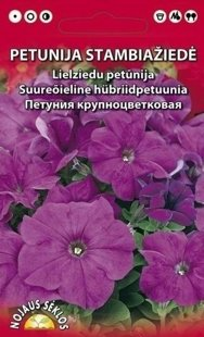 Petūnija lielziedi violeta