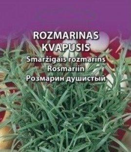 Rozmarīns  -smaržīgais    Daudzgadīgs