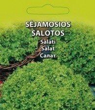 Salāti ( Lollo Bionda)   Agrā šķirne